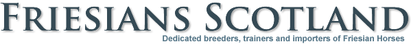 Friesian Horse Sales Scotland