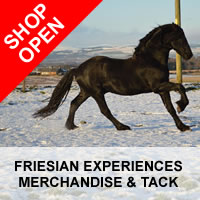 friesian horse experiences and tack